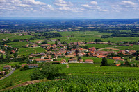 Vineyards of the Rhone River Valley, France
